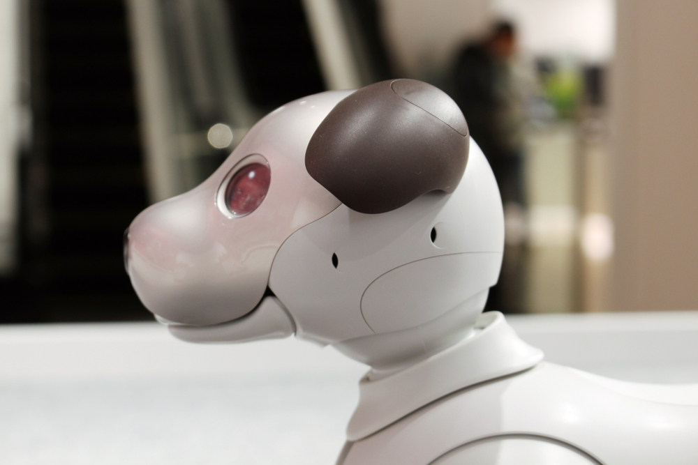 is your robot dog spying on you
