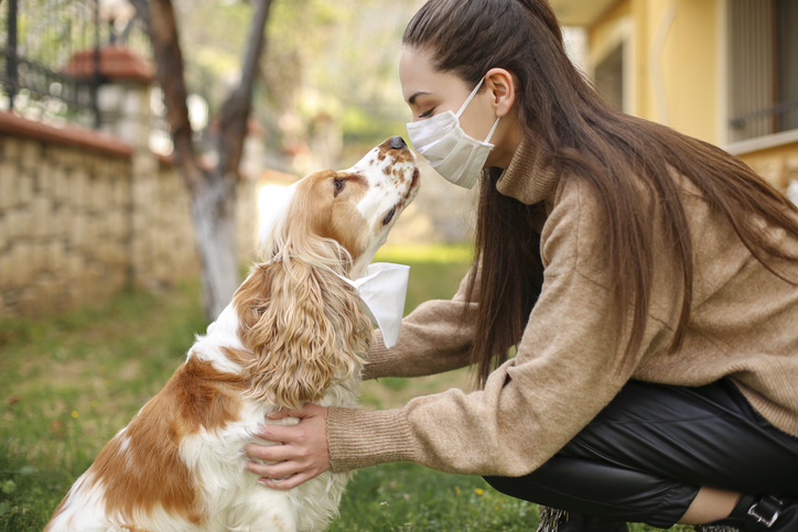 can your pets get coronavirus